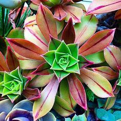 Plants will add a touch of color and purity. Find out which are the best office plants that you can use and why, here. Types Of Succulents, Cacti And Succulents, Planting Succulents, Cactus E Suculentas, Cactus Planta, Cactus Cactus, Succulent Landscaping, Succulent Gardening, Echeveria