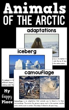 Arctic Animals PowerPoint, Activities...Great for kindergarten and first grade reading and informational writing