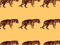 """""""Thee Tiger"""" by Jay KingSta! animal, brown, gold, liger, lion, orange, tiger, tigon, yellow"""