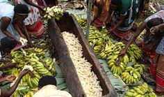 Little-known facts about bananas