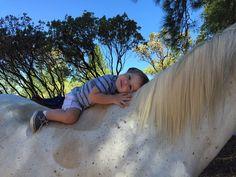 #Horsefever has got him! #BarnBuddies for life! Photo from Debi Kramer. #horseriding #horseback #horses