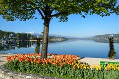 Foto Frühling in Klagenfurt am Wörthersee | Frühjahr Klagenfurt ... Klagenfurt, Carinthia, Austria, Places Ive Been, Flora, Mountains, City, Water, Travel