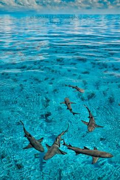 A look into the ocean realm through my eyes. Shark Bait, Reef Shark, Orcas, Shark Pictures, Delphine, Deep Blue Sea, Water Life, Great White Shark, Ocean Creatures