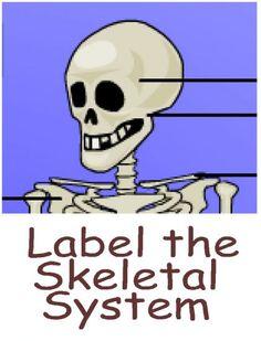 My Body, the Inside Story: Skeletal System Instructional ...