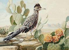 "Watercolor : William Warren Dailey Watercolor, ""Arizona Roadrunner"" Flowering Cacti & Desert Vistas, #240"