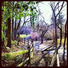 Daniels Run Trail, Fairfax VA
