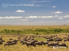 Mara Chui Resort is a lodge with accommodation facilities at the edge of Masai Mara National Reserve. Safari, African Antelope, Best Positions, Inspirational Wallpapers, Am Meer, Travel Images, Wallpaper S, Beautiful Landscapes, Paths