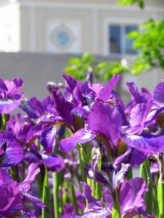 Gdynia w kwiatach