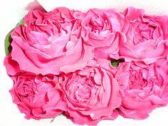 David Austin's Kate named for Kate Middleton David Austin, Garden Roses, Cut Flowers, Kate Middleton, Vegetables, Vegetable Recipes, Roses Garden, Veggies