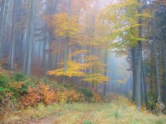 *🇦🇹 Foggy autumn woods (Kapfenberg, Austria) by WunderPhotographer Weather Underground, Different Seasons, John Muir, Time Of The Year, Hush Hush, Austria, Fall Winter, Woods, Nature