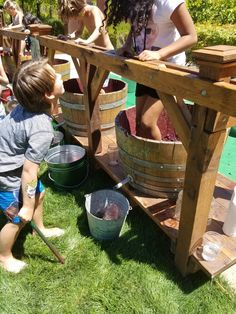 Grape stomping competition