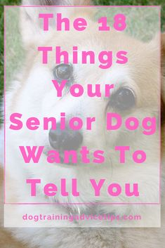 The 18 Things Your Senior Dog Wants To Tell You. #dogtrainingadvicetips #dogcare #doghealth #dogtips #dogs Basic Dog Training, Dog Training Videos, Feeling Unwanted, Pregnancy Guide, Dog Ages, Understanding Yourself, To Tell, Your Dog, How To Memorize Things