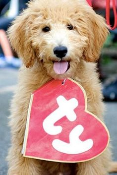 This costume should be really easy to make! |||| 20 Ways to Dress Up Your Dog This Halloween via @PureWow