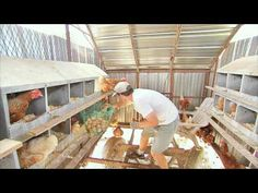 THE EGG COLLECTOR - Inside a Funny Organic Egg Farm - YouTube