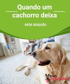 Quando um cachorro deixa este mundo Assumir a  morte de um  animal de   ba4f09e5c0e52