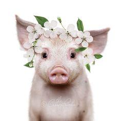 Boho nursery decor, PRINTABLE ART, Pig with flower crown, Girls nursery wall art, Baby animal prints Cute Ducklings, Cute Piglets, Baby Piglets, Cute Baby Pigs, Cute Baby Animals, Funny Pigs, Boho Nursery, Nursery Decor, Dibujos Cute