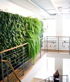 mezzanine moderne avec mur végétal intérieur à fougères retombantes