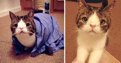 Conheça Monty: O Adorável Gato Com Um Rosto Incomum