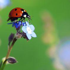 Ladybug Blues! | Danny Perez