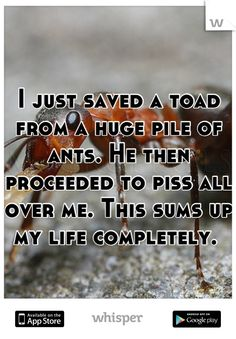 I just saved a toad from a huge pile of ants. He then proceeded to piss all over me. This sums up my life completely.