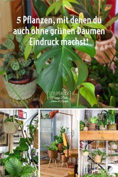 Außergewöhnliche und tolle Zimmerpflanzen, die nicht gleich eingehen? Hier stelle ich fünf meiner Lieblinge vor, die jedem Raum besonderen Flair geben, Leben ins Haus bringen und für bestes Raumklima in jeder Hinsicht sorgen! Pflanztipps zum Düngen, Gießen, Standort und mehr. Entdeckt Zimmerpflanzen, die auch bei dir als Urban Jungle Einsteiger gut überleben. %unbezahlte werbung / affiliate links] #pflanzen #plants #indoorplants #pflanzentipps #urbanjungle #zimmerpflanzen #urbanjungleblog Boho, Lifestyle Blog, Group, Interior, Plants, Inspiration, Decor, Blogging, Indoor House Plants