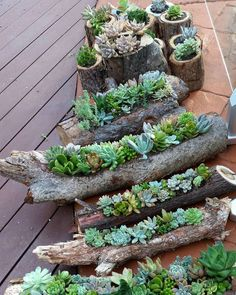 ❤~ Cactus~❤~Suculentas~❤ Succulent gardens in hollowed out logs and also in timber rounds available from the Succulent Guy at the Byron Bay Beachside Market - Easter Saturday March. by thesucculentguy Diy Garden, Garden Projects, Garden Plants, Indoor Plants, Garden Landscaping, House Plants, Succulent Landscaping, Air Plants, Garden Types