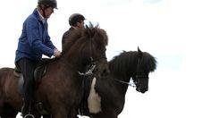 The true Icelandic horse on Vimeo