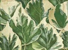 View Variegated Ivy Leaves By Eliot Hodgkin; tempera on gesso prepared board; Access more artwork lots and estimated & realized auction prices on MutualArt. Juan Sanchez Cotan, Tate Gallery, Ivy Leaf, Book Of Hours, Friends Are Like, Human Soul, Magazine Art, Art Market, Still Life