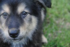 7 Reasons Why Mutts Are Awesome! http://spunkymysterybooks.com/dog-lovers-2/adopt-a-mutt-why-mutts-are-awesome/