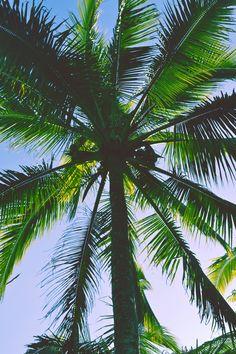 imagenes de palmeras tumblr - Buscar con Google