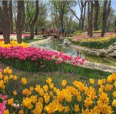 Emirgan park, Istanbul.