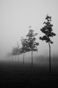 Skinny trees in a mist drenched park, shot by Nicolò Panzeri.