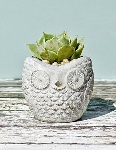 """The Owl Cement Planter A is a gray colored cement flower pot shaped like a cute owl.  It is composed of modern stylized cement that has a smooth texture that won't detract or distract from its plants or the overall theme of your interior design.   Super adorable!   Kids love it!  •Two sizes.  (3""""x 3¼""""x 3¼"""") (4½""""x 4½""""x 4"""").  •CONTAINS NO PLANTS, SOIL OR ROCKS.  (Product for sale is just the container)."""