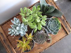 succulent plants are supposedly difficult to kill off...maybe i'll try one