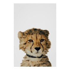 Baby Cheetah Poster - modern gifts cyo gift ideas personalize