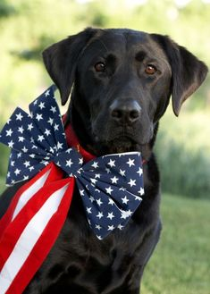 Here's one beautiful, patriotic dog :)