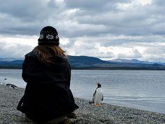 Penguin Encounters, The Beagle Channel, Tierra del Fuego