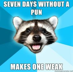 Lame Pun Raccoon