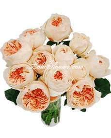 peach david austin roses