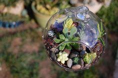 Far Out Flora, succulent globes