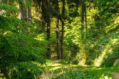 Durch den grünen Wald im Hüttental, Landschaft, Waldweg, aufgenommen im Mai