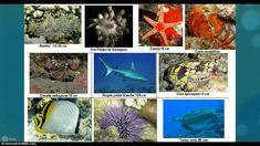 La biodiversité et les parentés entre êtres vivants