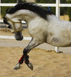 Beautiful horse pictures