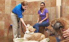 An Intermediate Dog Behavior Training Class Petsmart Dog Training, Cesar Millan, Training Classes, Dog Behavior, Best Dogs, Puppies, Young People, Daddy, Ideas