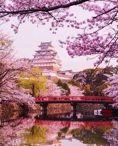 Waking up in a fairytale world. ✨ witnessing this castle in all it's glory was a dream come true - Himeji Castle, Japan Natur Wallpaper, Cherry Blossom Japan, Cherry Blossoms, Himeji Castle, Beautiful Places, Beautiful Pictures, Japanese Temple, Aesthetic Japan, Japanese Architecture