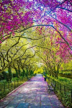 Spring time in Central Park, New York City.