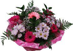 Mozgó Képek és csillogó csodák - Képgaléria - Csillogó és mozgó virágok