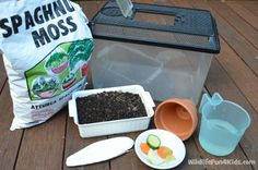 What you need to keep snails - a nice way to introduce making a habitat for the snails