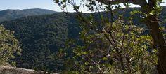 La Foresta de Is Cannoneris - Visit Pula Pula, Sardinia, Mountains, Nature, Plants, Naturaleza, Planters, Nature Illustration, Outdoors