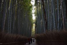 Best of Kyoto #3, #4